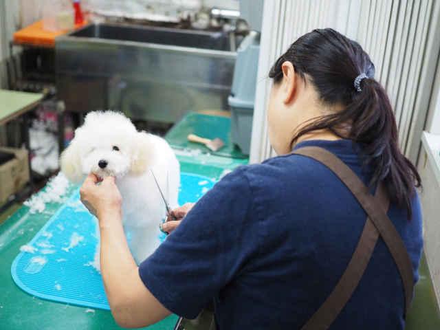 桜新町駅 動物病院